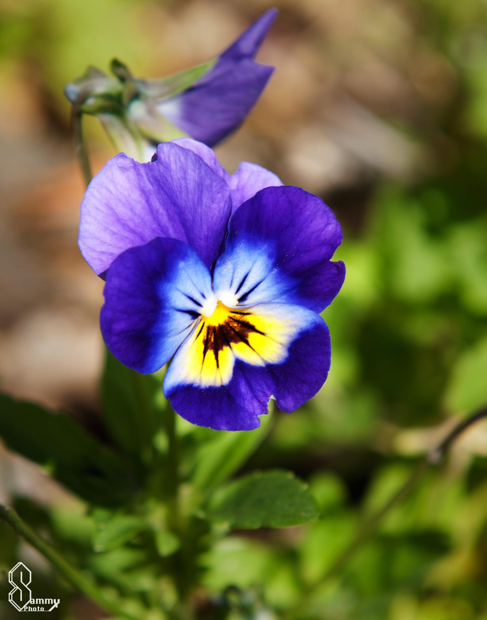 Flower Friday | Sammy Photo