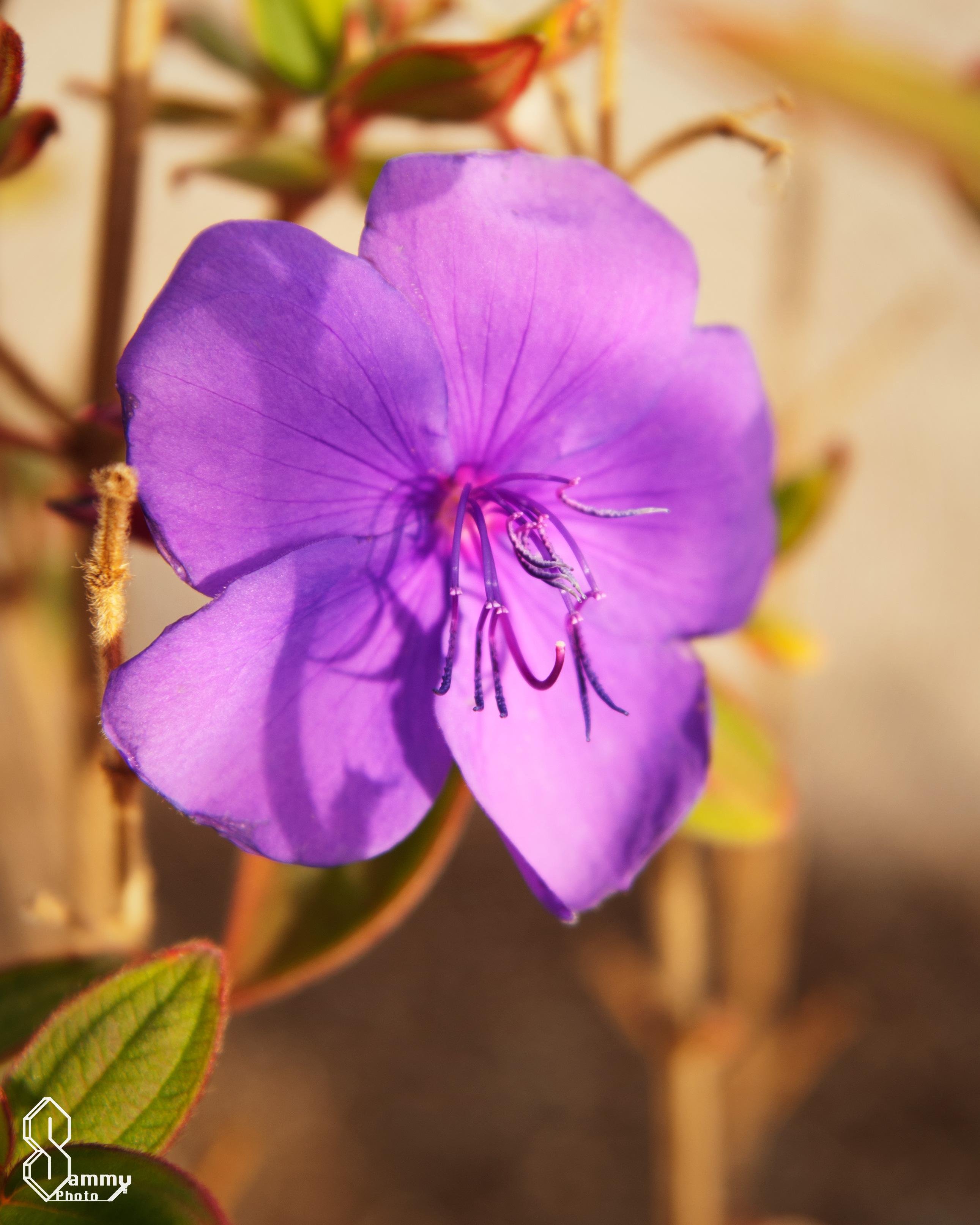 Flower Friday Sammy Photo